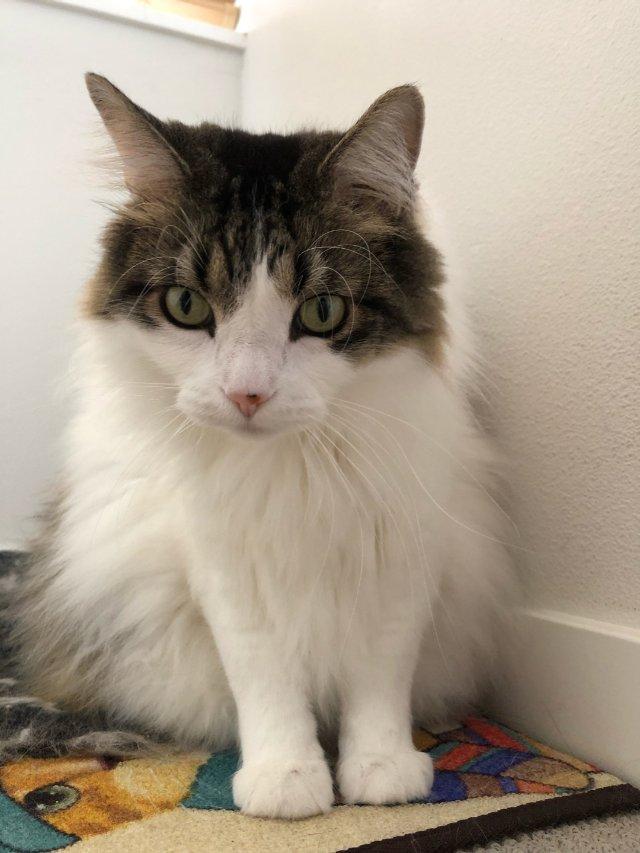 【芝麻馅的大汤圆】家有大猫
