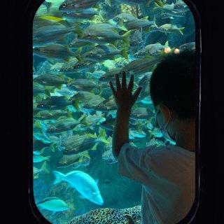 早起避开人群去新英格兰水族馆...