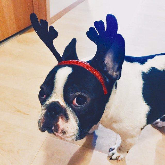 圣诞饰品|2018倒计时打卡|发箍耳环