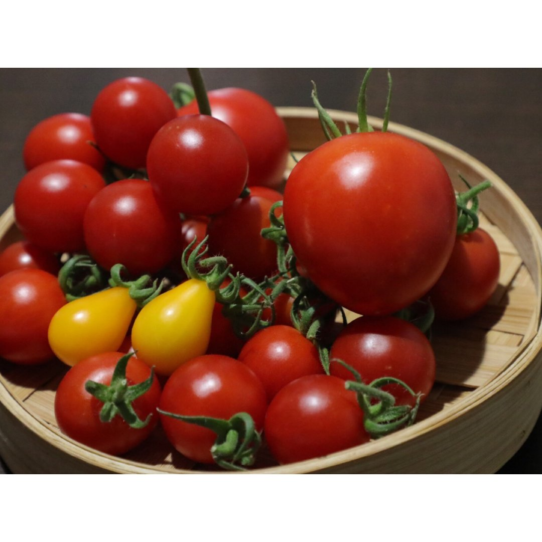 阳台菜园|第二波番茄🍅