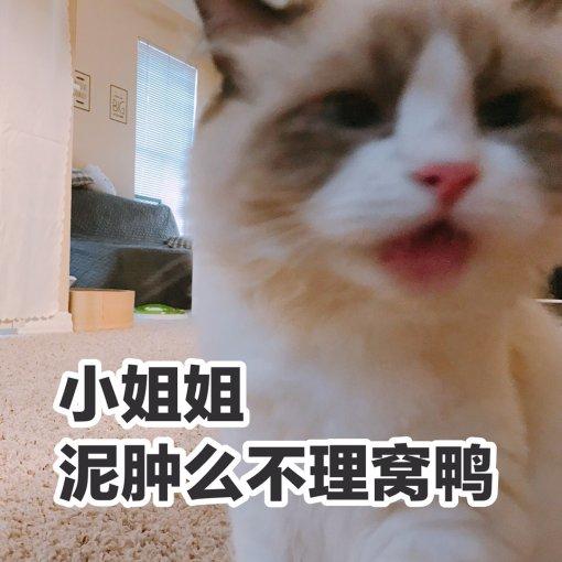 布偶猫用品推荐:白色🐱沐浴清洁必备增白套装