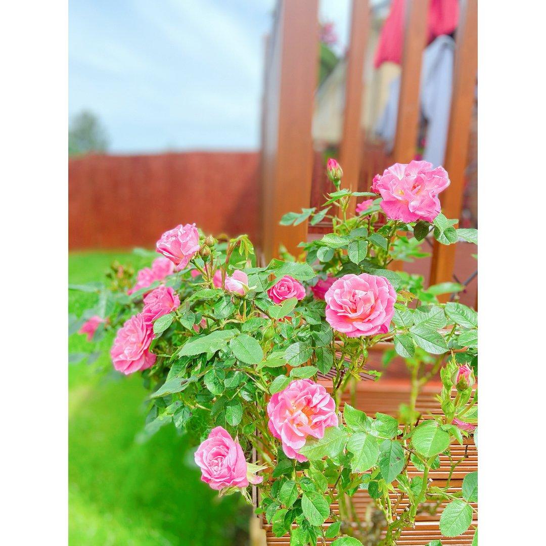 后花园的花儿开了🌷...