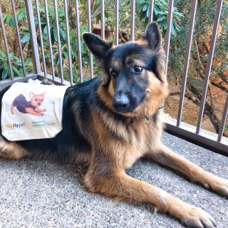 GGflypet | 一篇来自狗狗🐶的测评