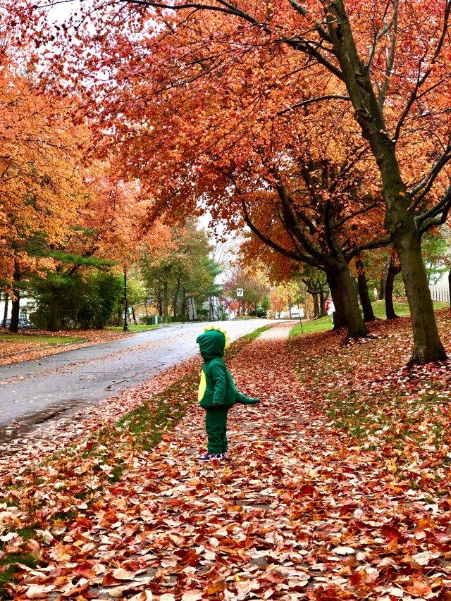 🙀充满惊吓的十月—快点过去吧~~