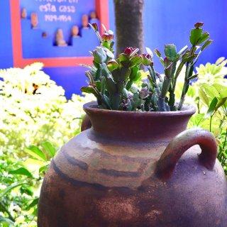 【墨西哥旅游】让毕加索自叹不如的女人及她...