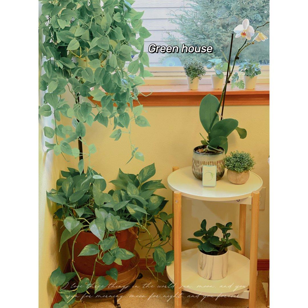 春日气息|居家植物|我的green ho...