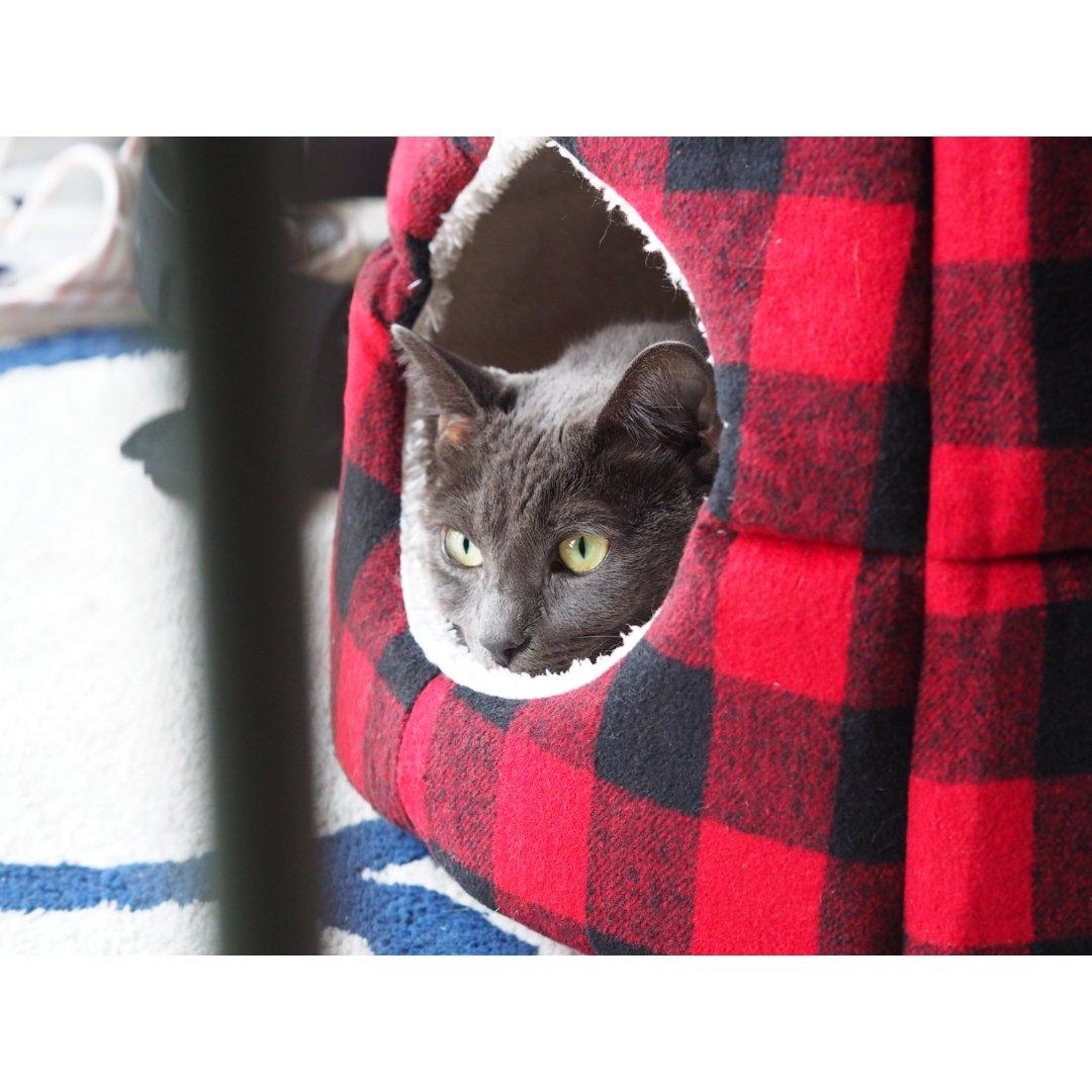 3.3 咪🐱   猫咪过冬神器❗️...