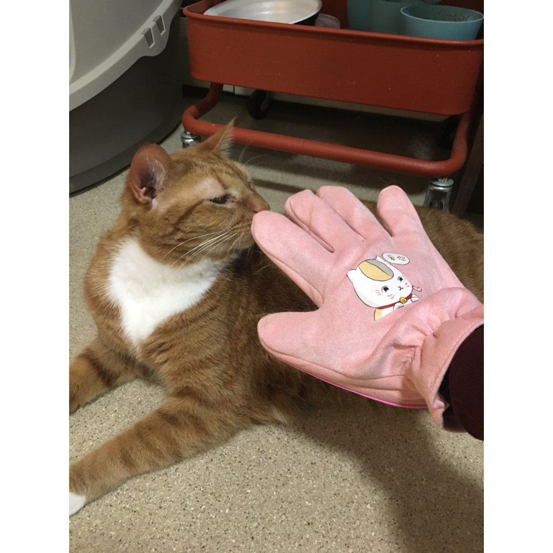 求求养猫的小伙伴去买这样的手套🧤