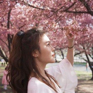 手把手教你如何在人人人人海里拍樱花照...