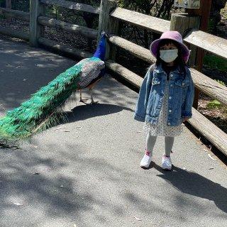 【周末遛娃】SF动物园...