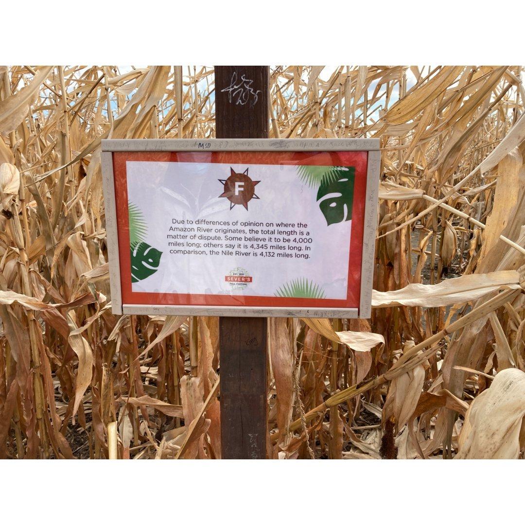 农场活动之玉米地迷宫