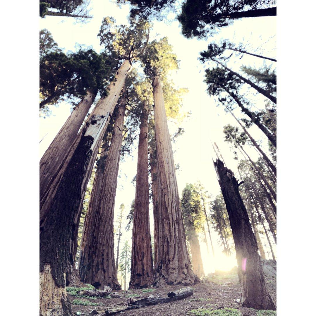 Sequoia National ...