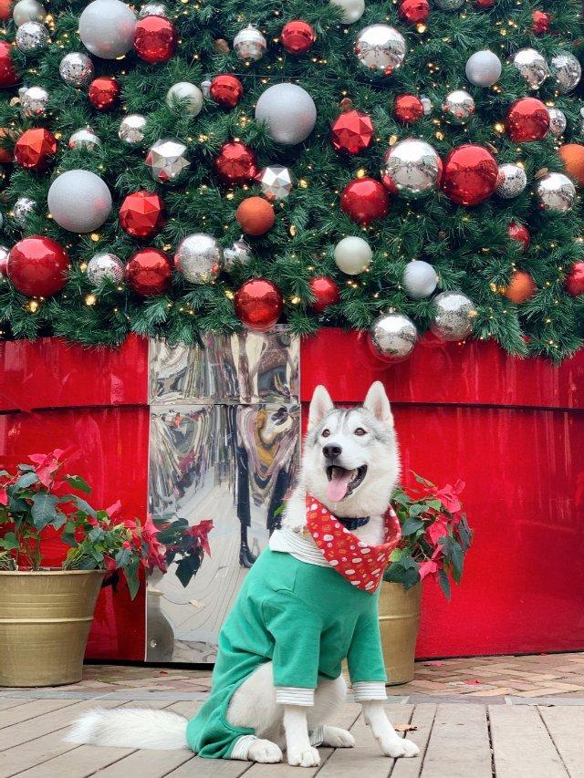 圣诞节当然要红配绿赛狗屁咯!