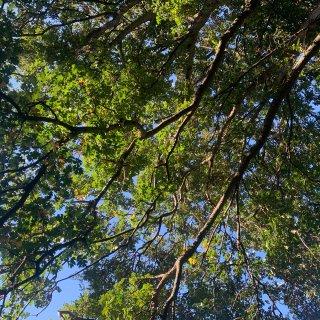 秋天的Royal Botanic Gar...