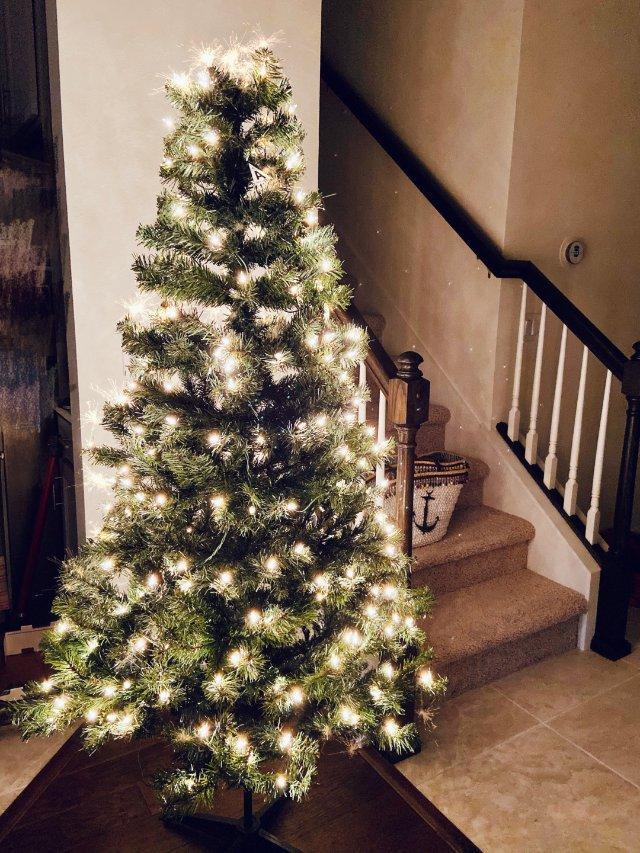 今年的圣诞树🎄买好了没?
