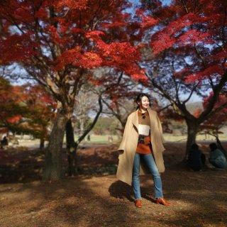 奈良公园的枫叶太美了!枫叶色穿搭🍁...