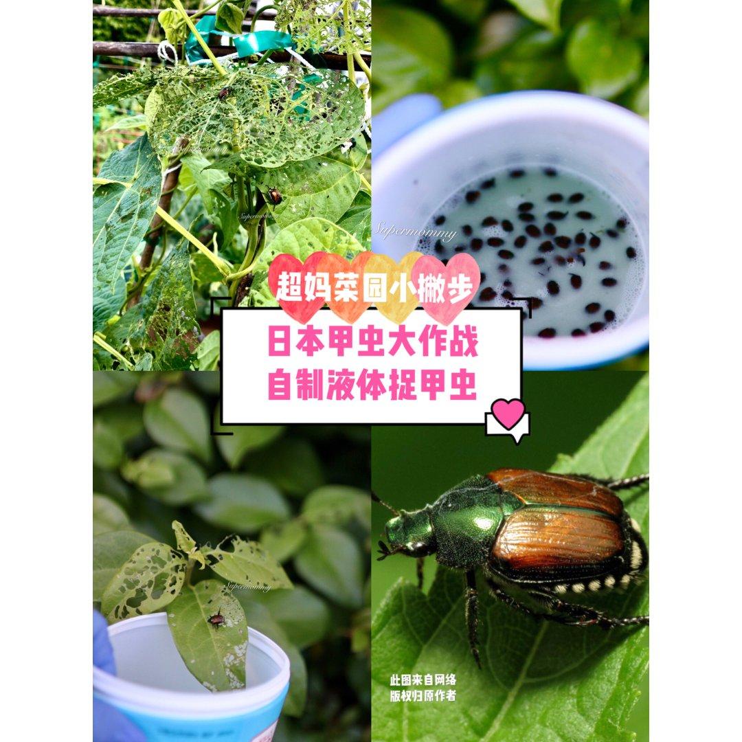 🌱菜园小撇步/甲虫大作战🌱