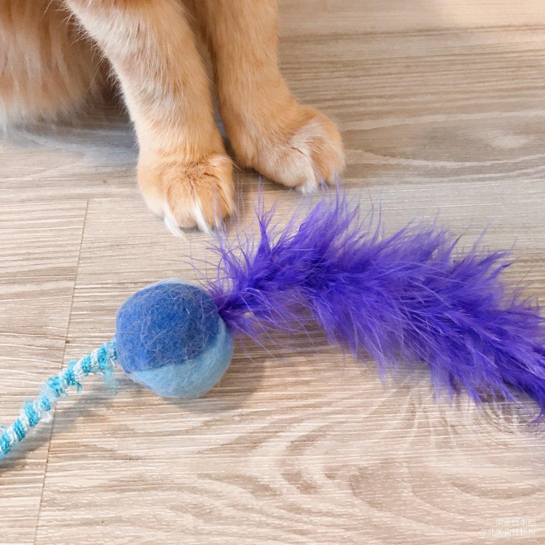 逗猫好物|毛孩子最爱的鸡毛逗猫棒💐
