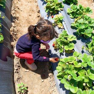 Underwood Farm,摘菜遛娃的...