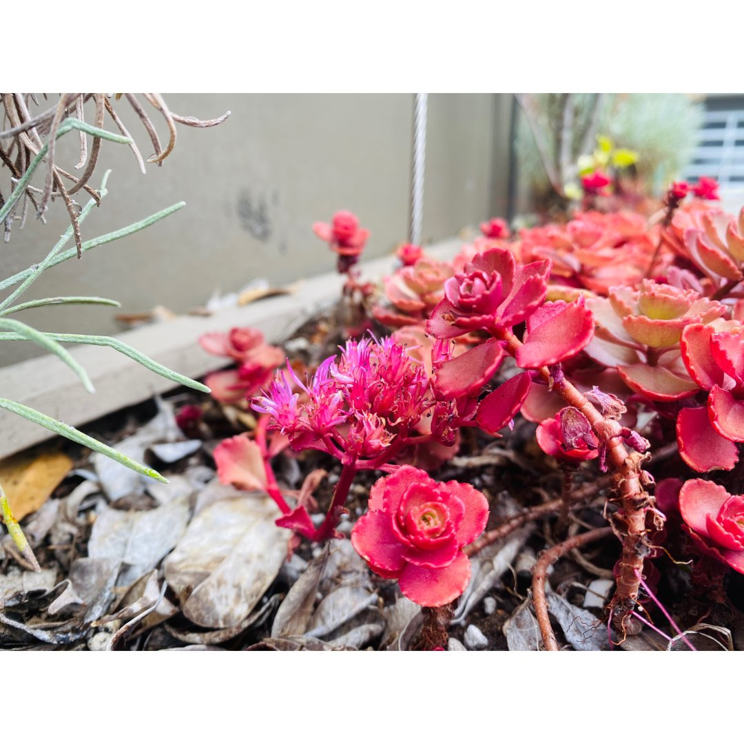 家居|后院植被:同一种植物居然三棵...