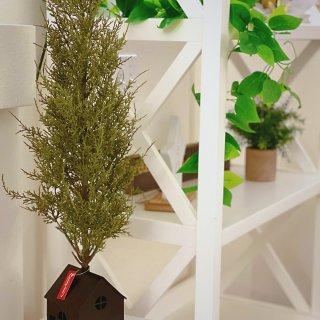 室内绿植|打造Ins风家居|净化空气好...