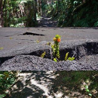 夏威夷|大岛一天走遍火山公园🚗🏃♀️...