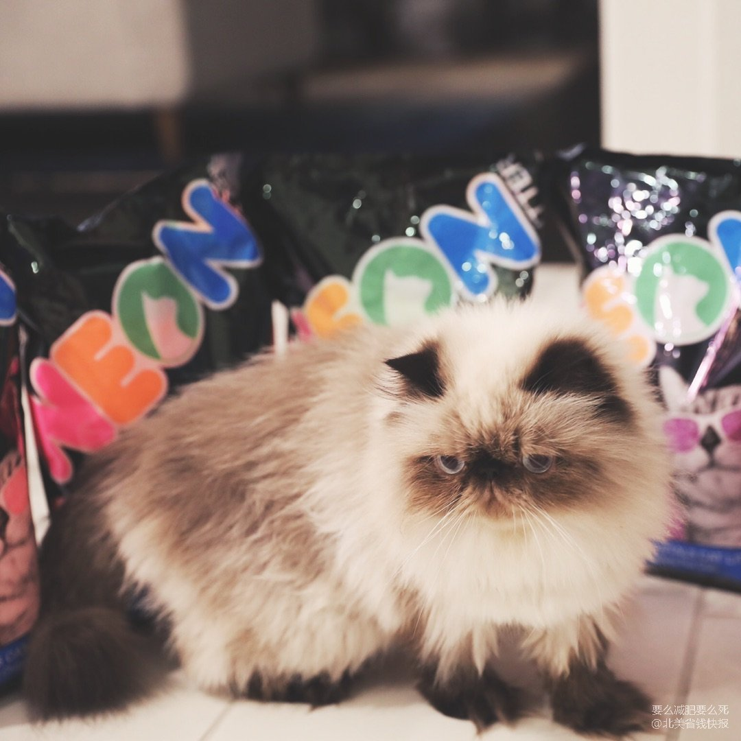 小伙伴给喵送的小礼物——彩色猫砂!