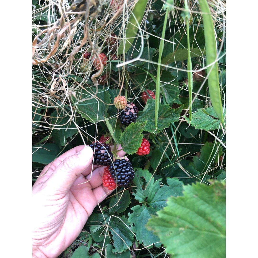 摆摊了🎉🎊黑莓片