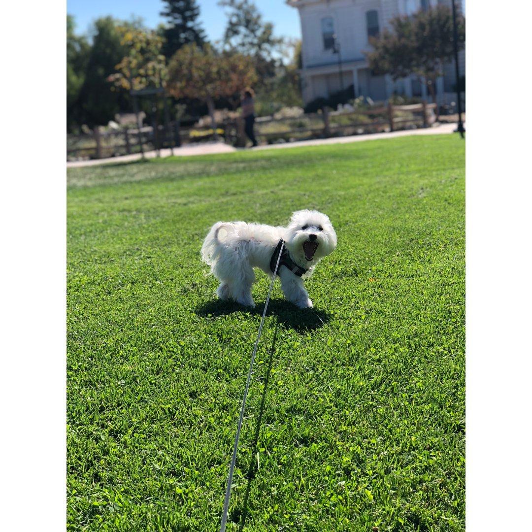 4️⃣想带狗狗去公园让它们狂奔!