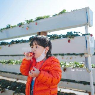 尔湾好去处/田中农场实现草莓自由🍓🍓...