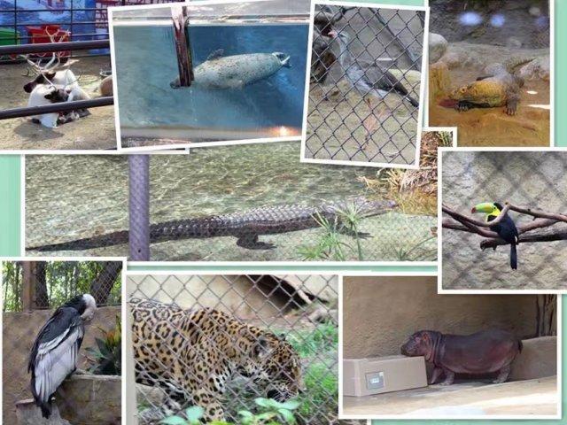 动物小世界:LA Zoo