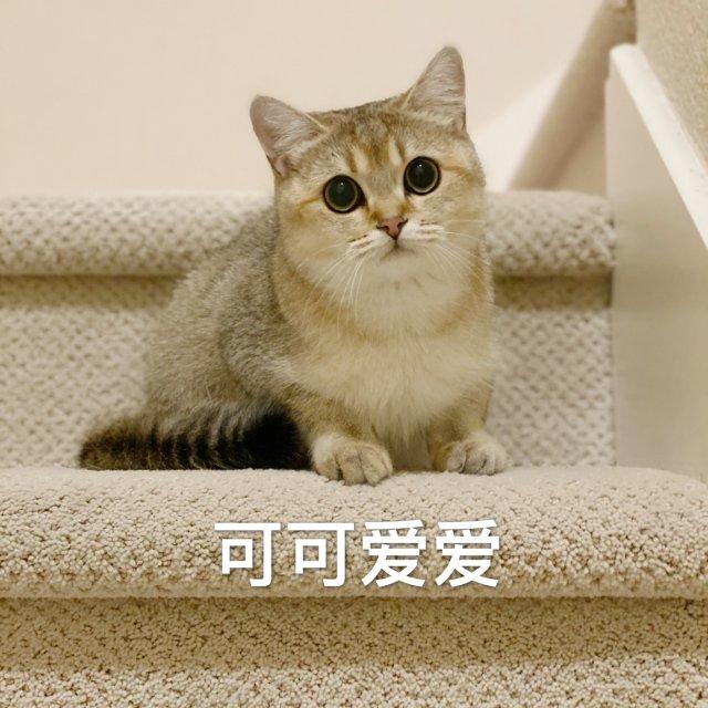 吸猫时刻 |Mochi表情包大赏