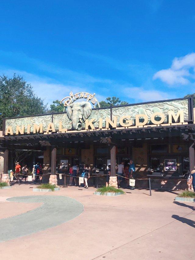 旅游攻略|奥兰多迪士尼Animal...