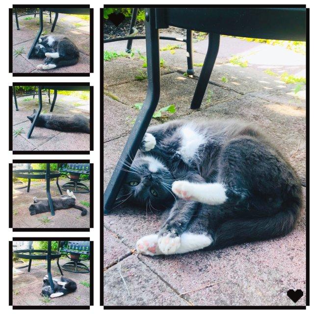 萌宠 | 旅行小福利 猫咪🐱的后花园