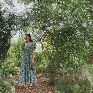 家后院的植物园🌳...