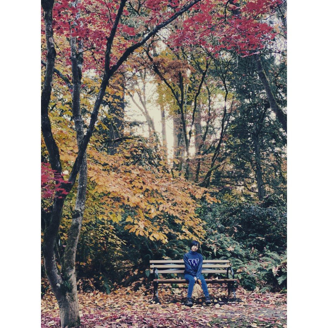 华盛顿植物园的秋色非常好拍