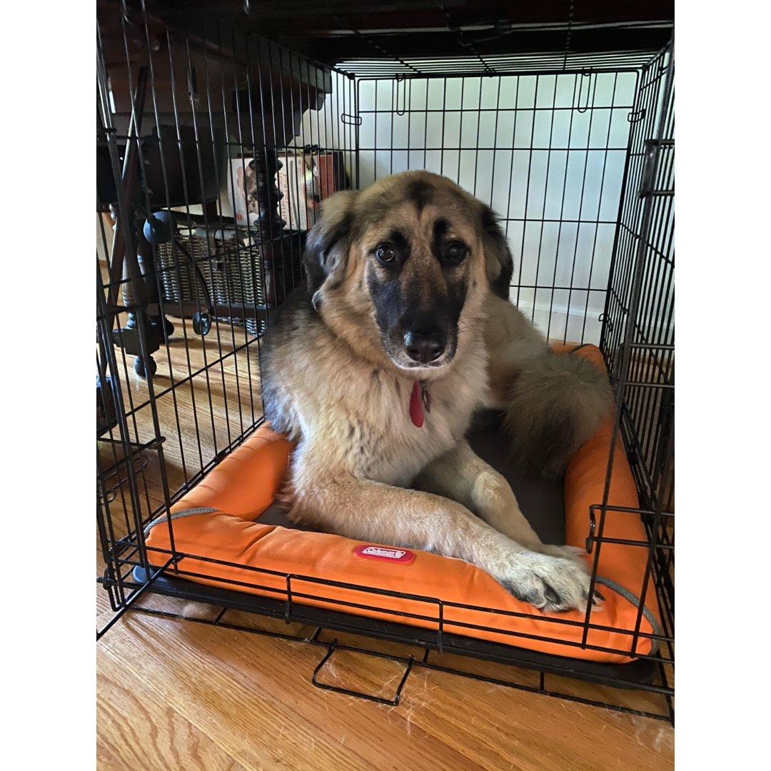 狗子新床垫
