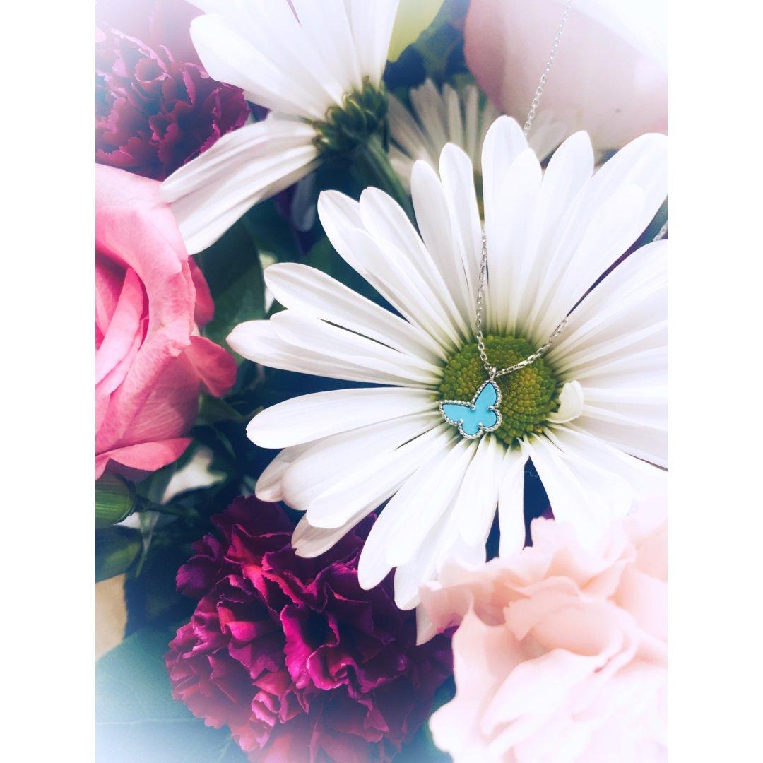 🦋你若盛开,蝴蝶自来🦋