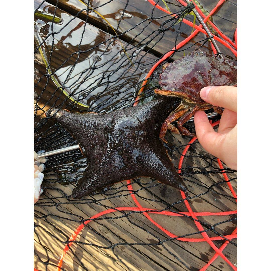 学习怎么钓螃蟹