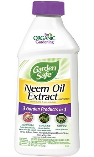 Amazon.com : Garden Safe Neem Oil Extract Concentrate (HG-83179) (16 fl oz) : Insect Repellents : Garden & Outdoor