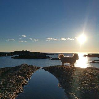 最近天气好,多出门晒晒🌞和狗子吧!...