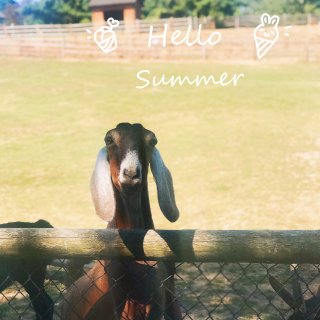 盛夏一起来看可爱的草泥马🦙|周末短途旅行...