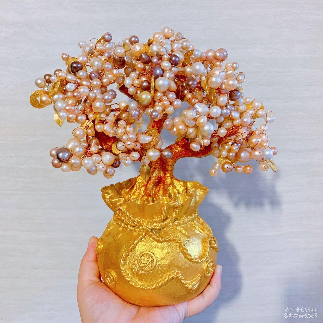 珍珠发财树