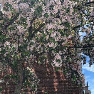 春夏的花🌹🌼