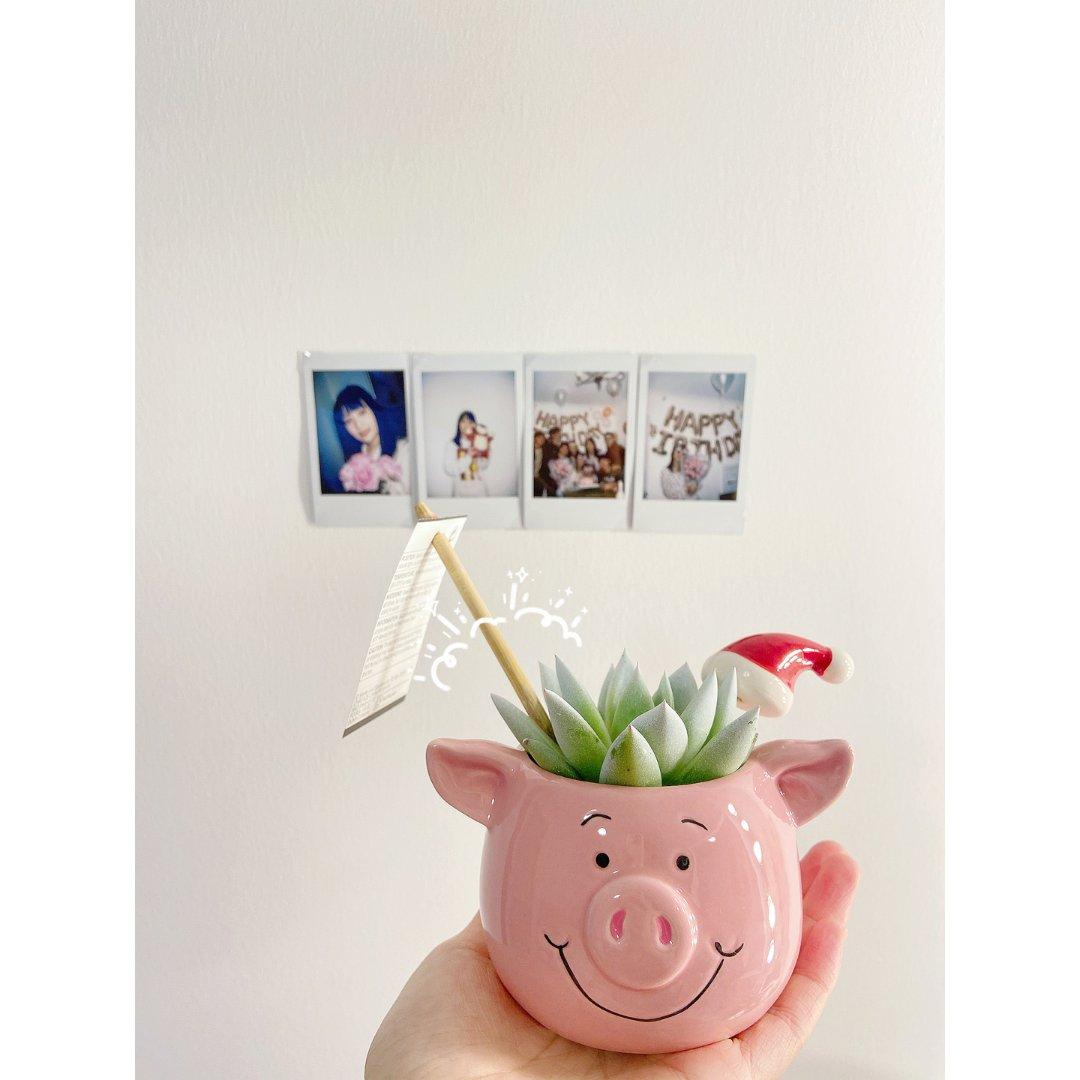 M&S玛莎新晋网红猪🐷Percy pig...