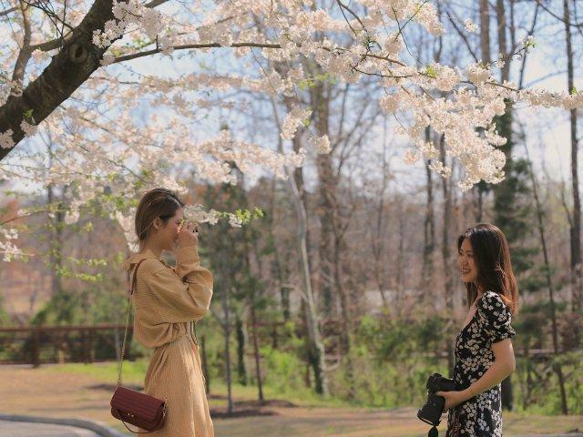 一年一度🌸|和粉嫩的樱花拍个照—V...