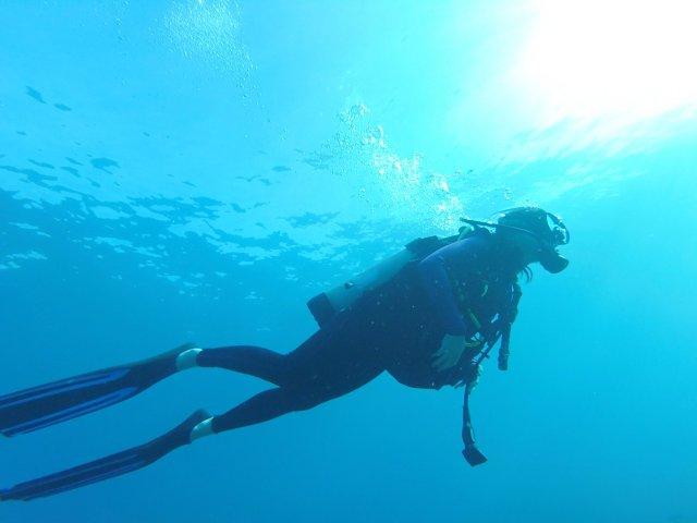 去夏威夷潜水体验|与海龟偶遇,与鳐鱼共舞