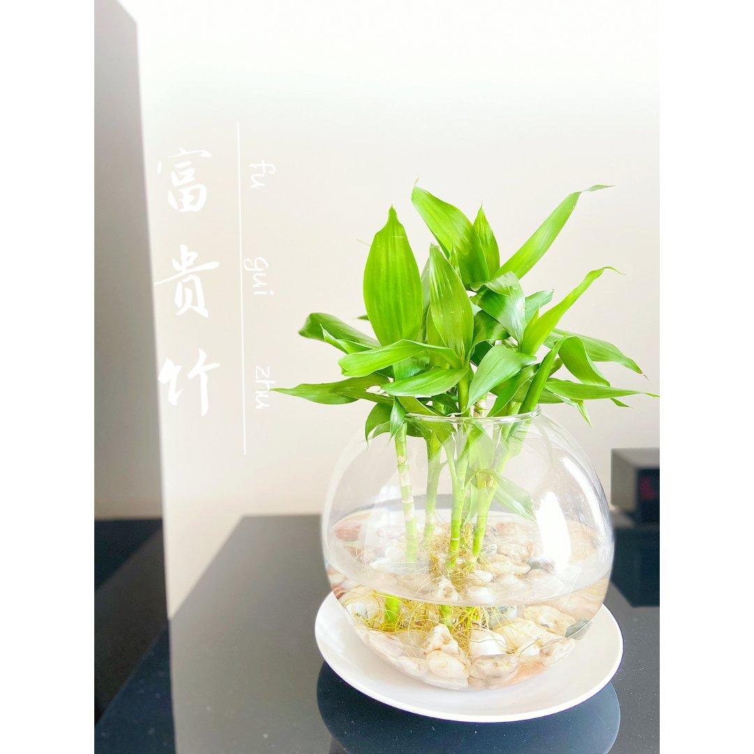 绿植盆摘🍃3⃣️