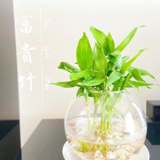 绿植盆摘🍃3⃣️...