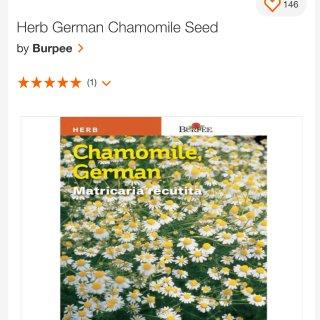 Burpee Herb German Chamomile Seed-66019 - The Home Depot